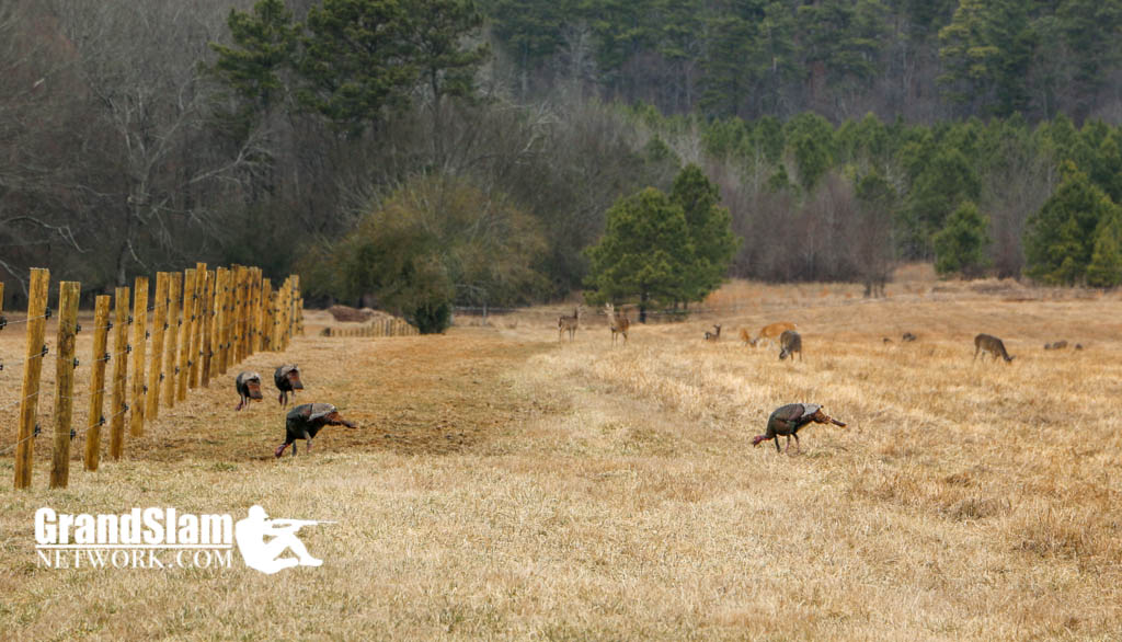 Turkey Hunting Land
