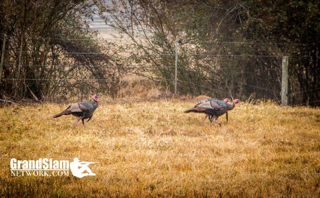 turkey-hunting-north-georgia-11
