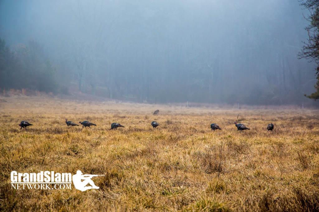 turkey-hunting-north-georgia-13