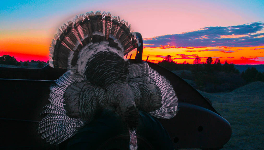 Turkey Hunting in Montana